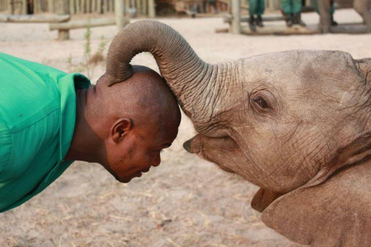 Lilayi Elephant Nursery - Elephant Orphanage Project