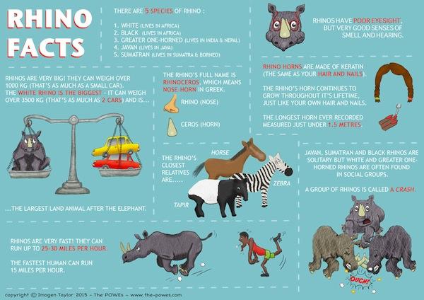 Rhino Infographic