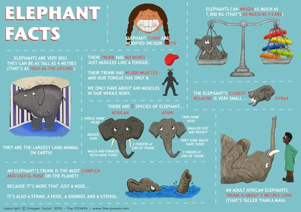 Elephant Infographic