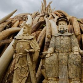 Ivory Trade Ban (Cracking Down on Illegal Ivory)