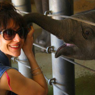 Sabai The Elephant
