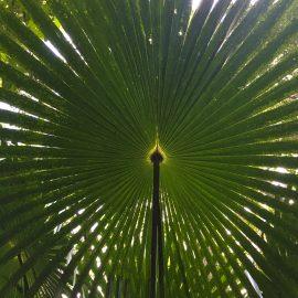 #RainforestDay
